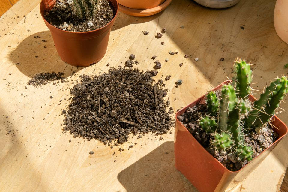 Small cactus in orange pot next to cactus soil on wooden surface