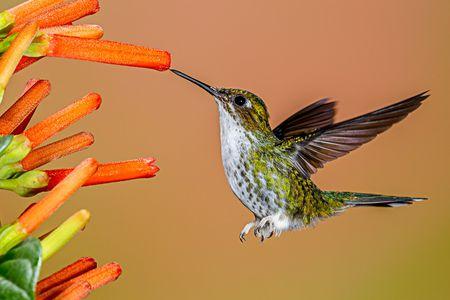 2  humming birds feeding on a flower