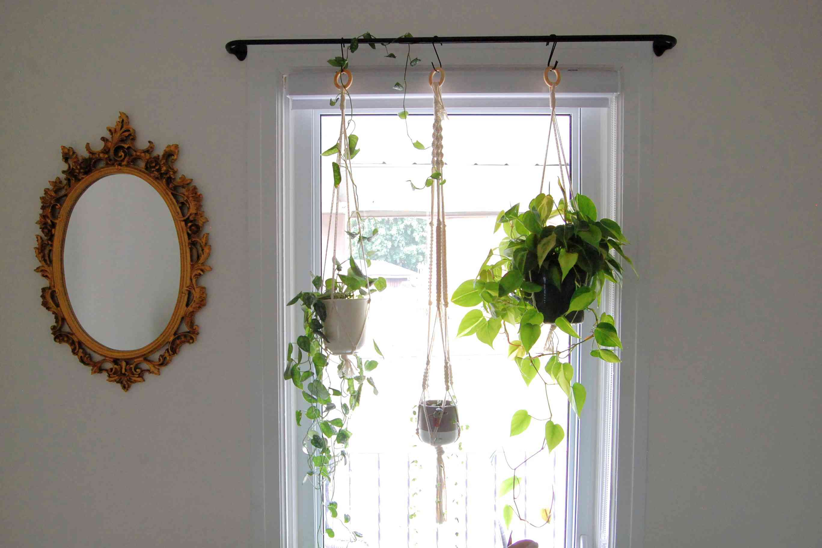 3 hanging plants hang from a curtain rod in front of a bright window.