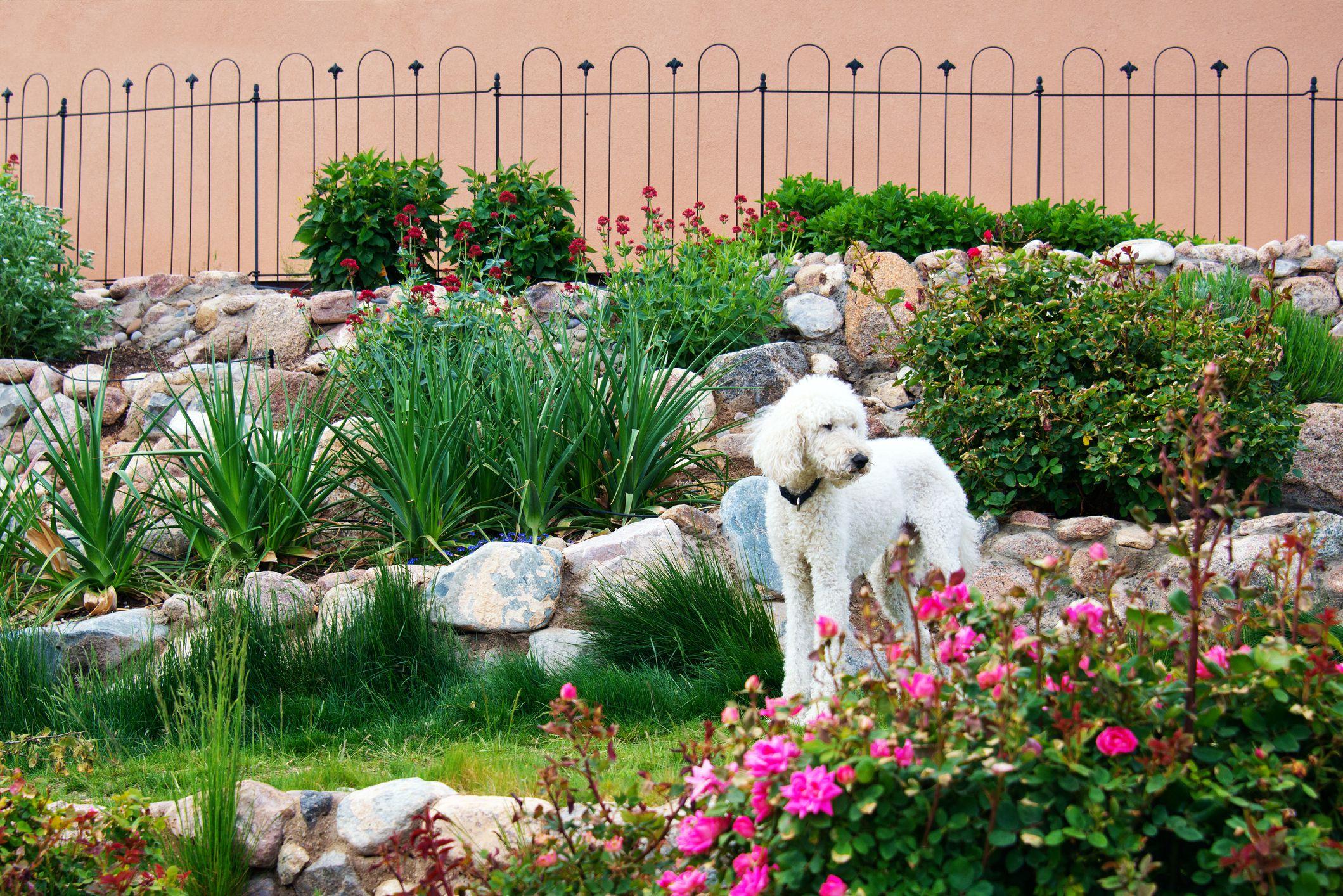 Dog Garden Path