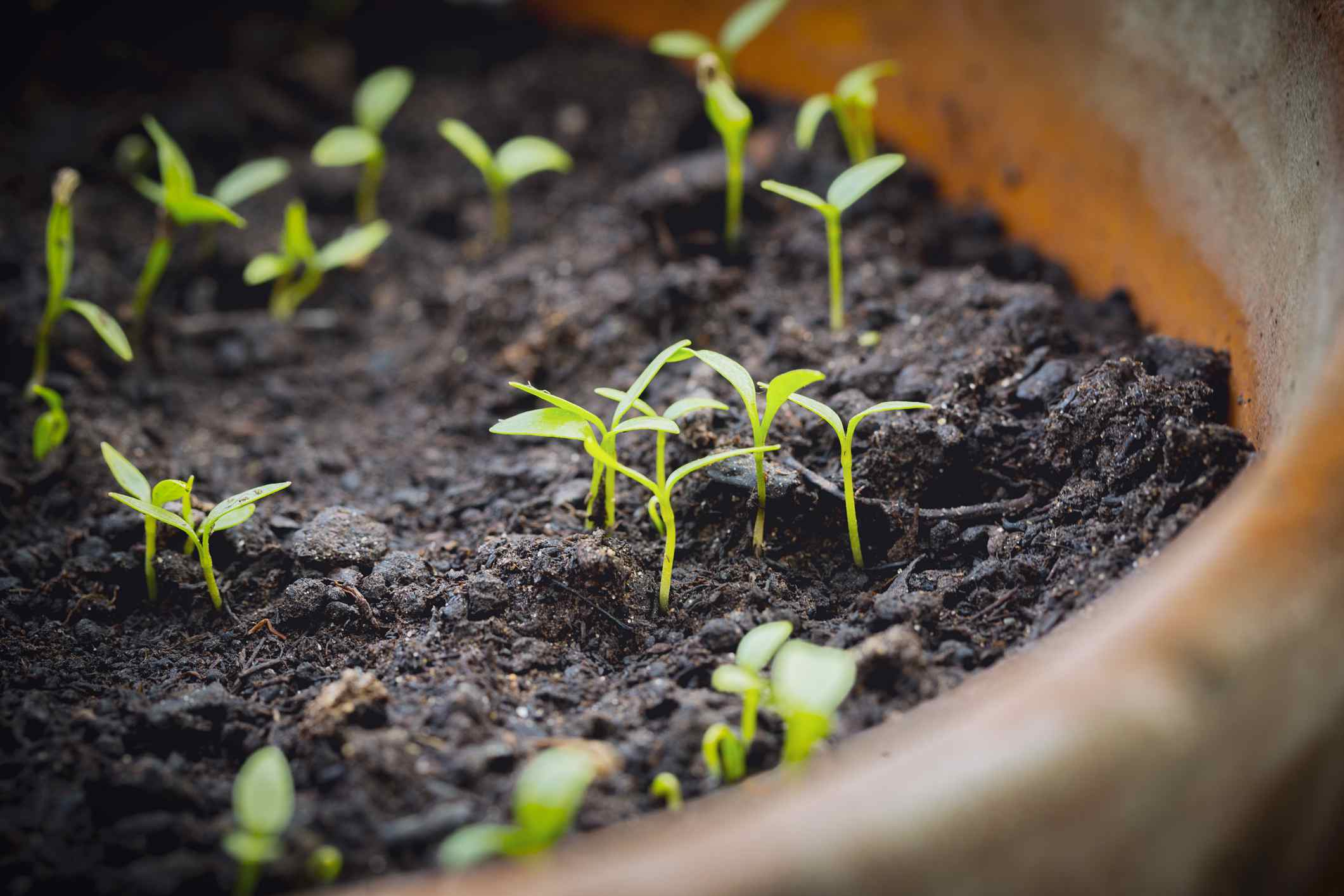 plant sprouts in a pot