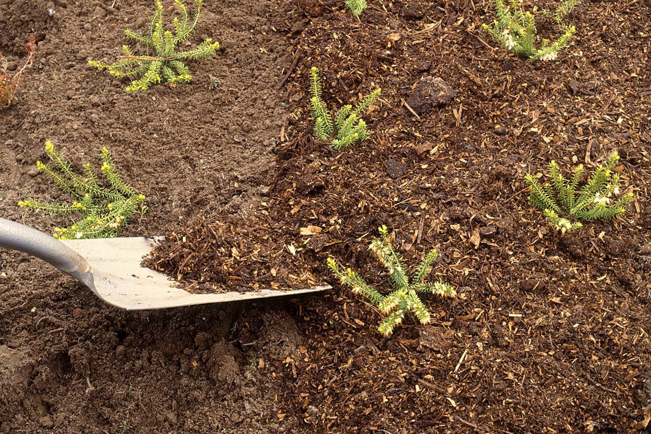 How To Mulch Flowerbeds
