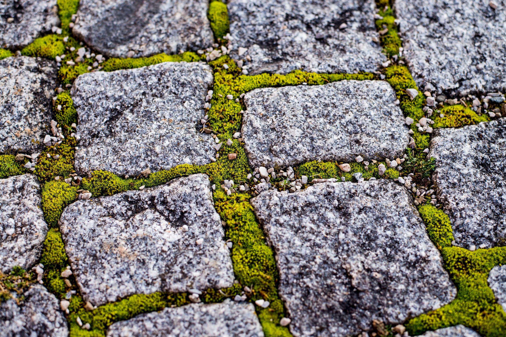 Grow moss between cobblestones to create interest.