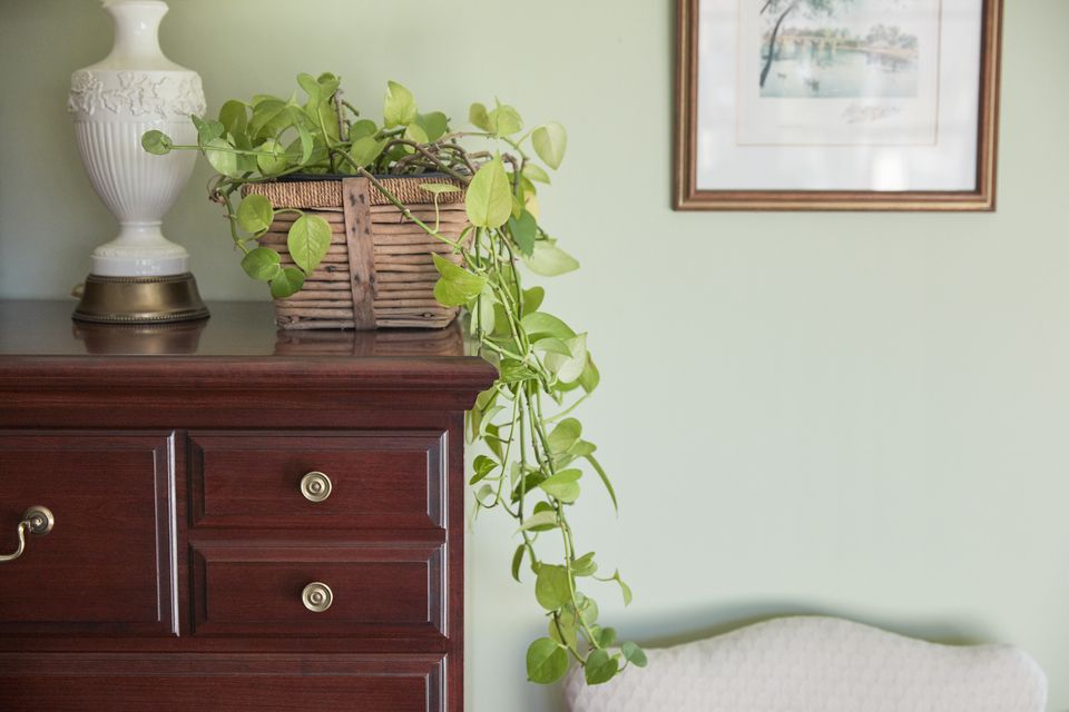 a philodendron plant on a dresser