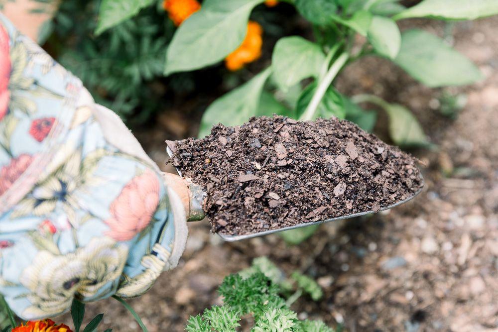 person examining top soil