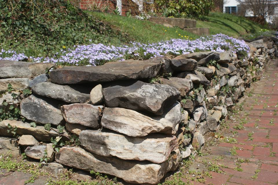 Stone retaining wall with creeping phlox growing on top of it.