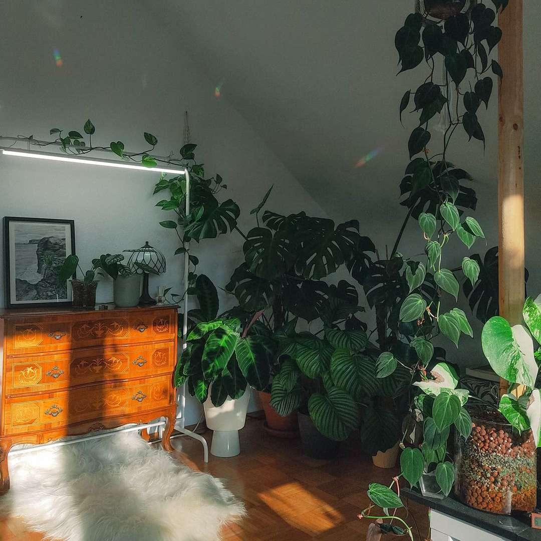 corner with plants