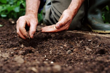 Determining the Proper Depth to Plant Seeds