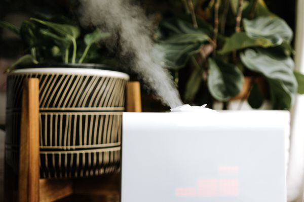humidifier near houseplants
