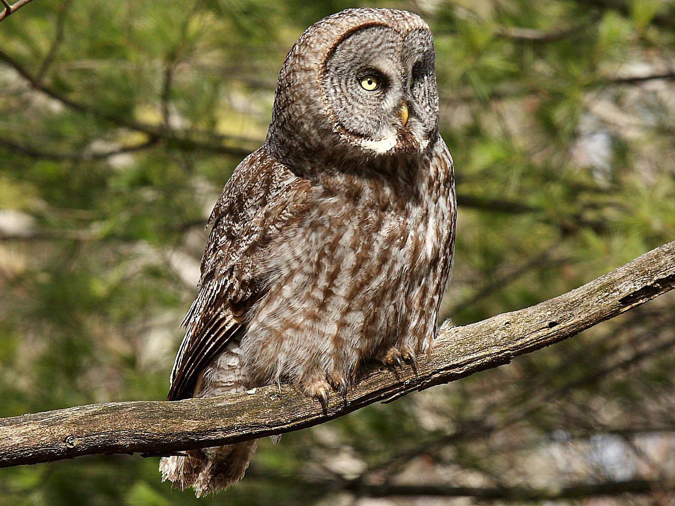 Fun Facts About Owls