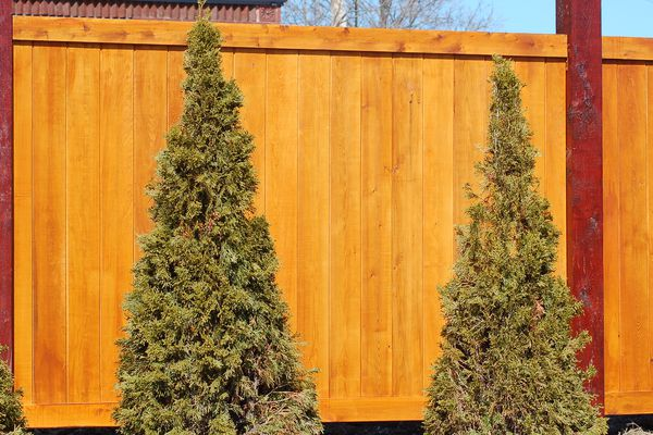 Wood fence with a shrub planting.