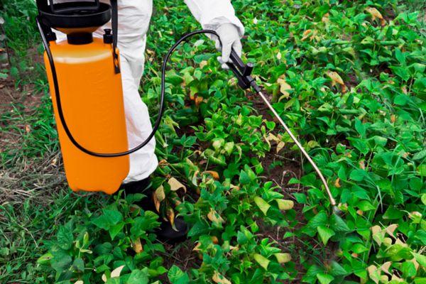 person applying pesticide