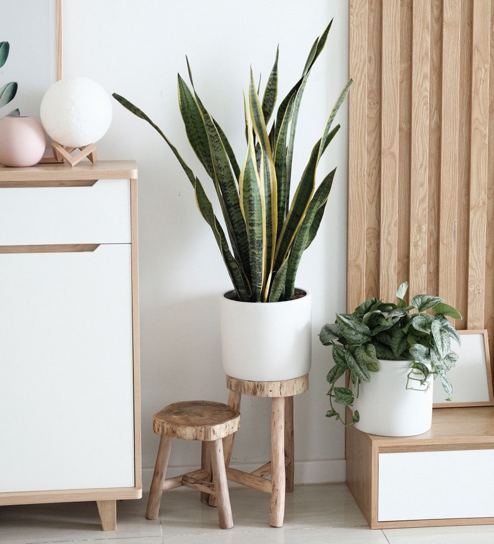 House plants in white pots