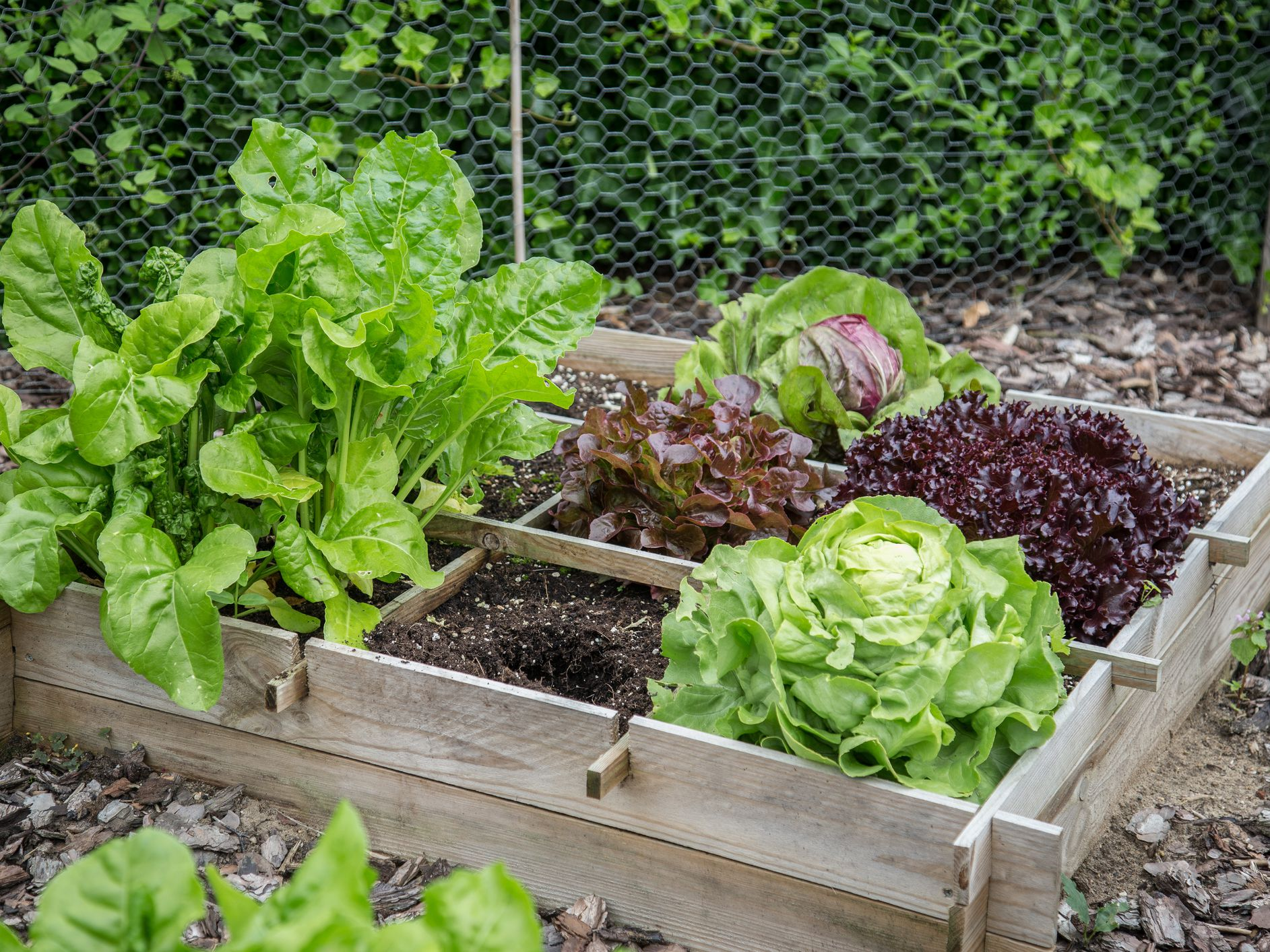 High Yield Vegetable Plants For Small Garden Spaces