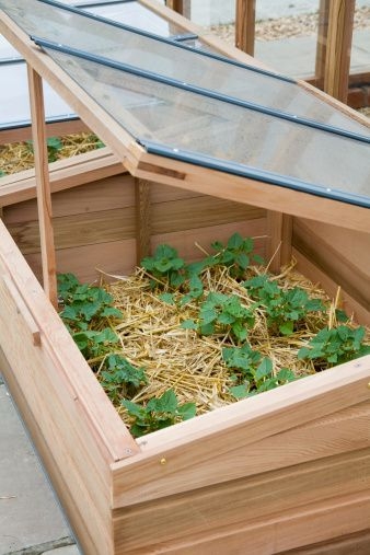 A cold frame full of plants