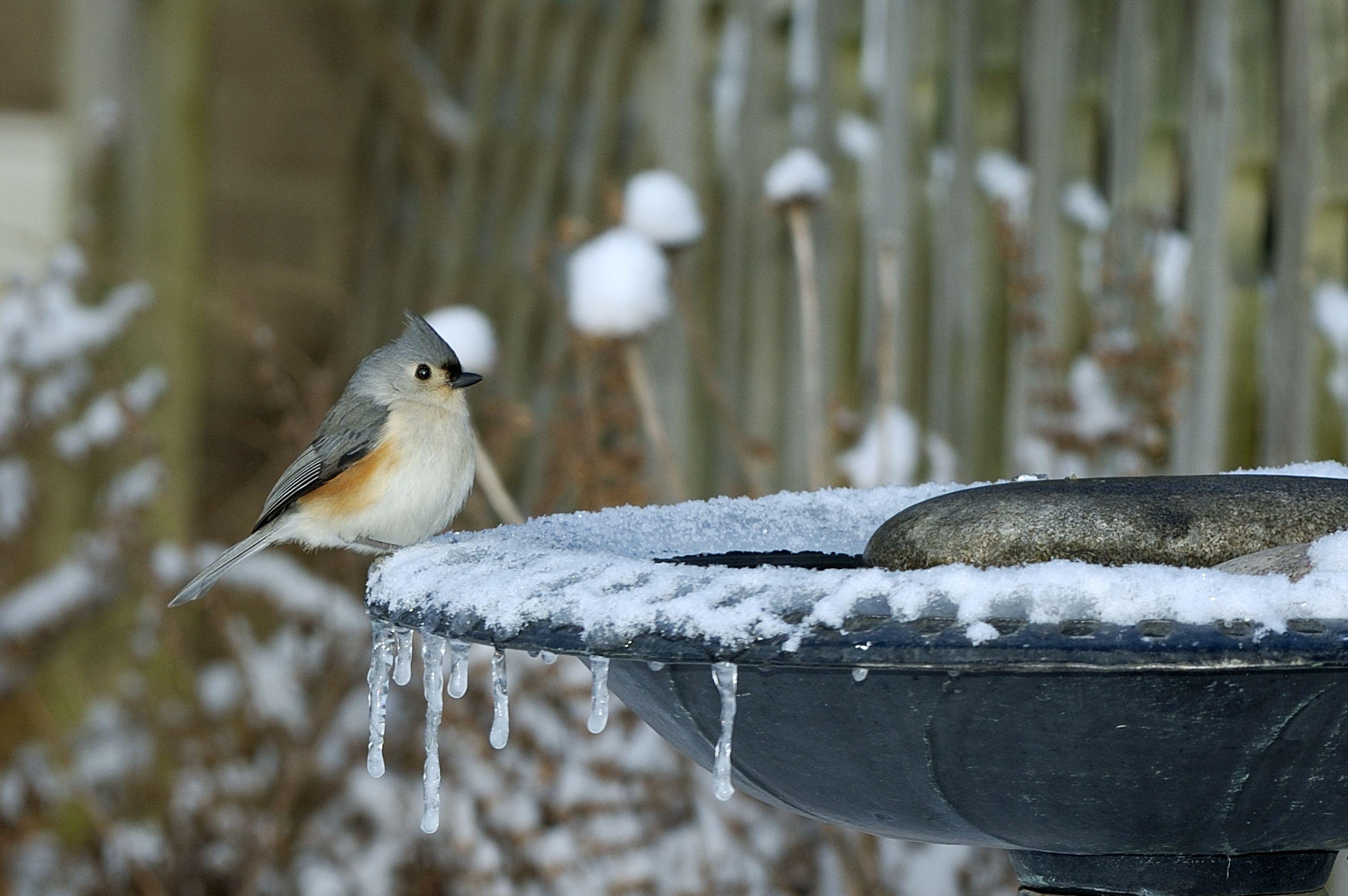 Easy Tips To Use A Heated Bird Bath
