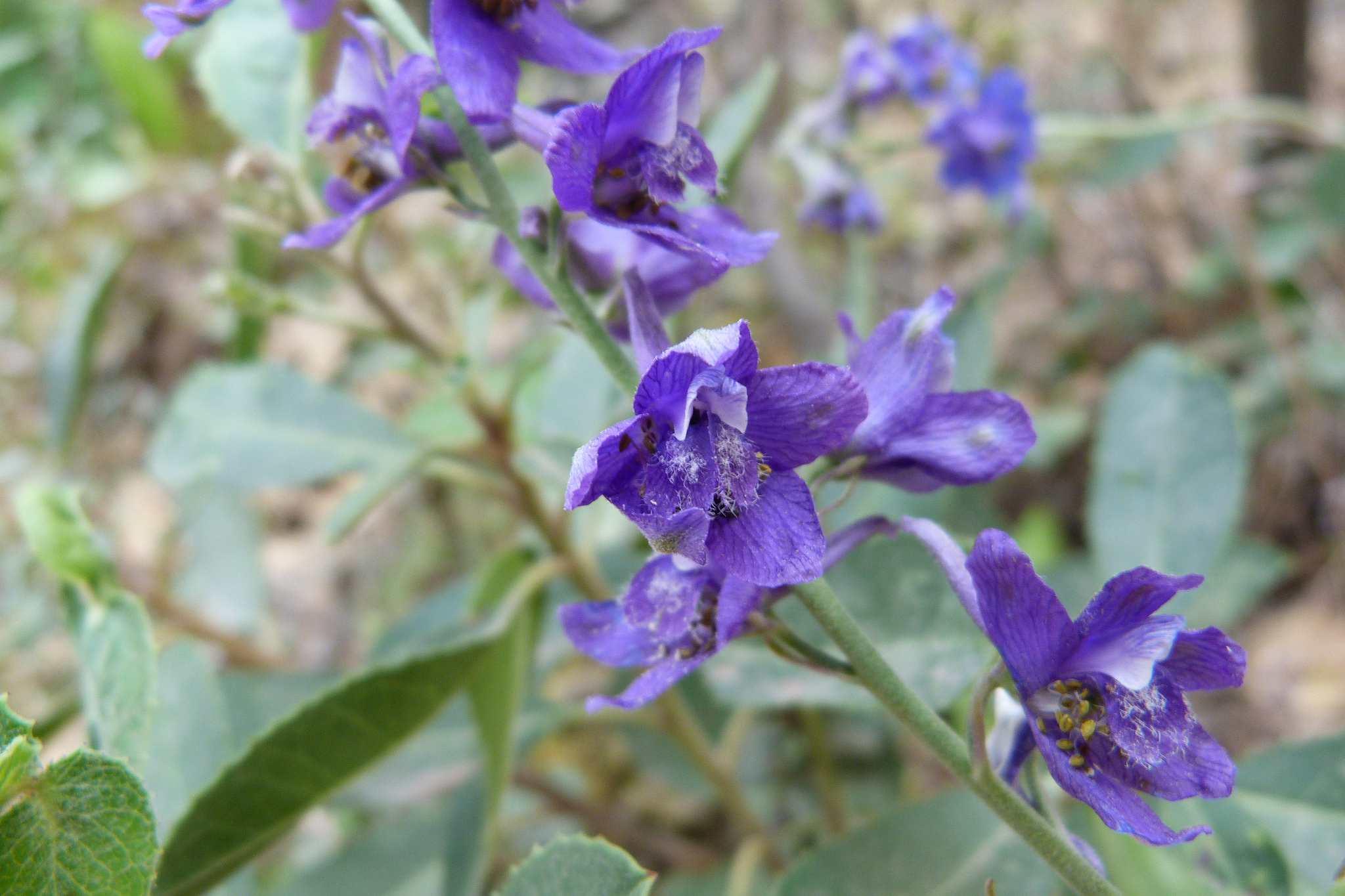 14 great landscape plants with purple flowers izmirmasajfo