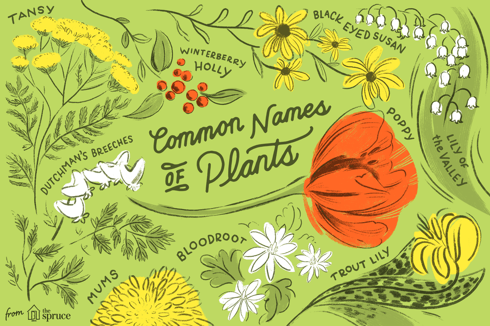 Database Of Common Names Of Plants