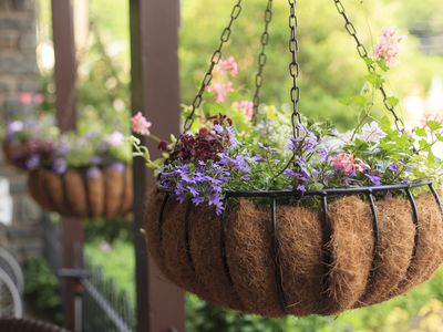 Flowering hanging basket ideas 7 steps to a perfect hanging basket container garden ideas mightylinksfo