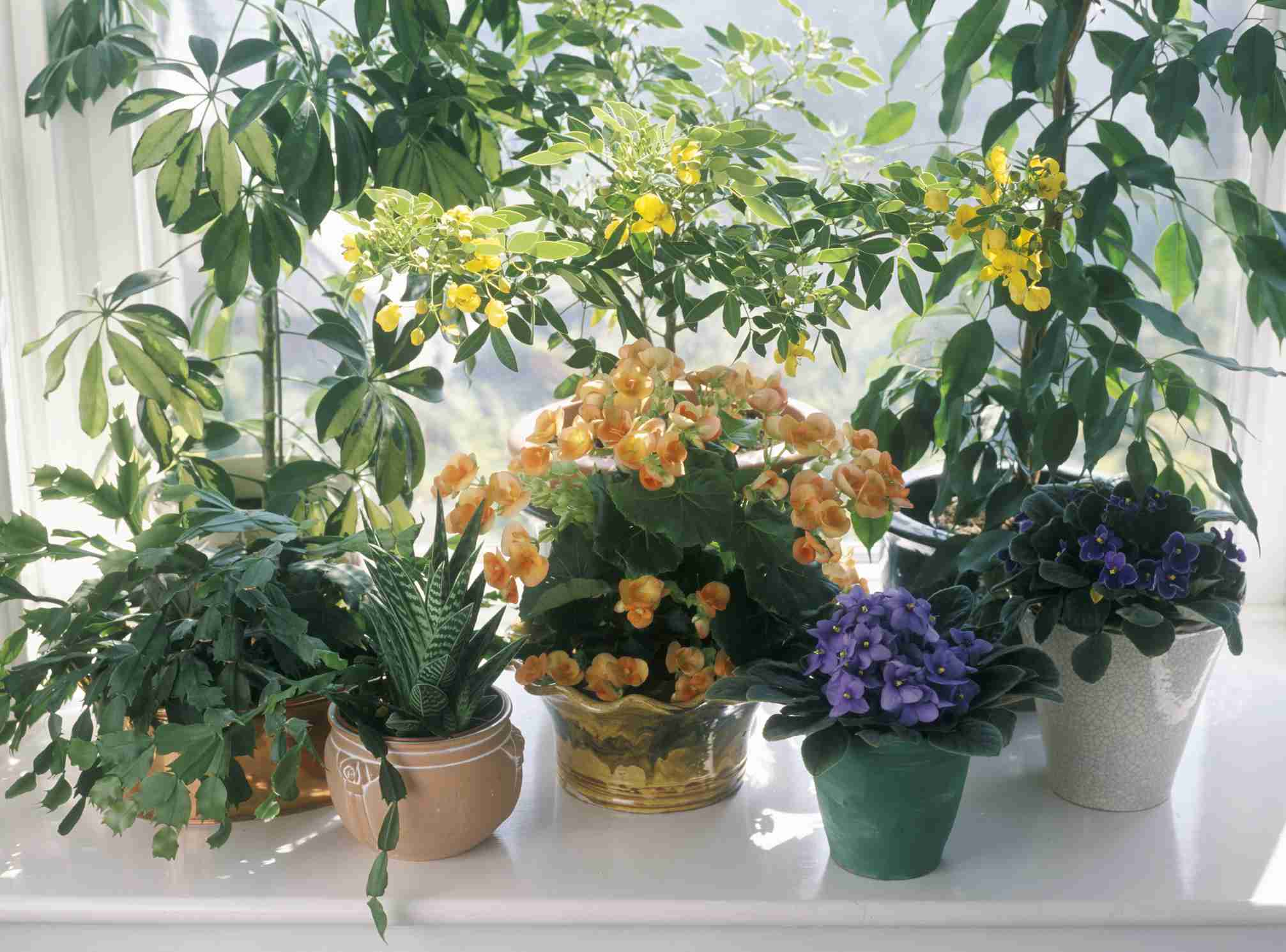 Clustered House Plants