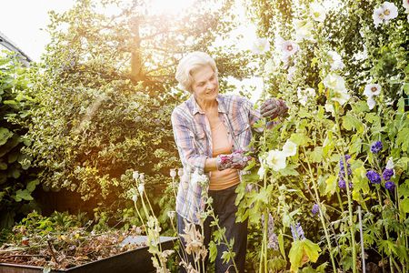 Prevent and control rust fungus in your flower garden mightylinksfo