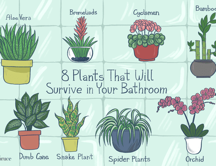 12 Tropical Plants for Growing Indoors on