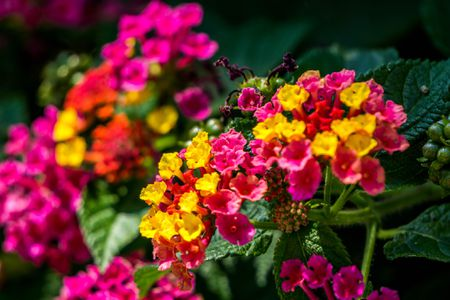 12 Plants That Repel Mosquitoes