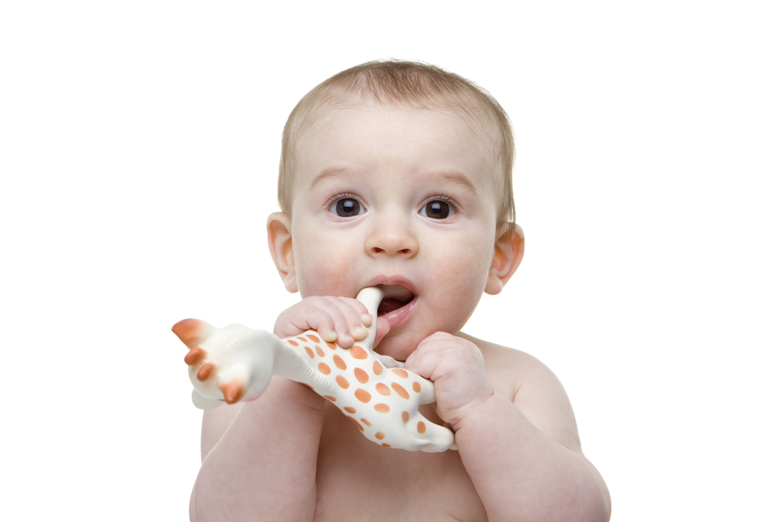 Why Do Babies Like Teethers