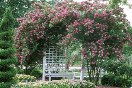 benches and arbor - The Best Vines For Pergolas And Arbors