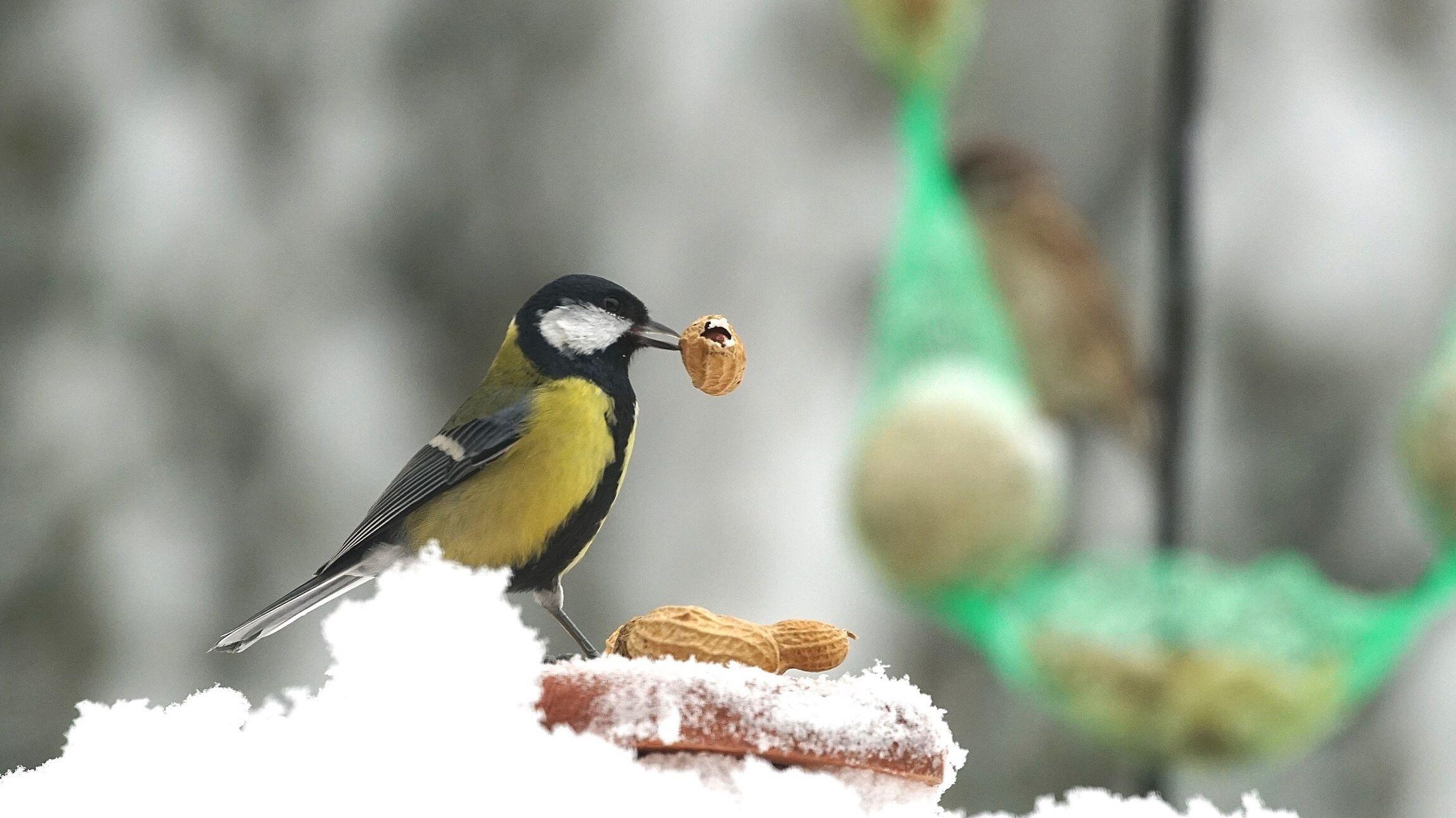 do birds need salt in their diet