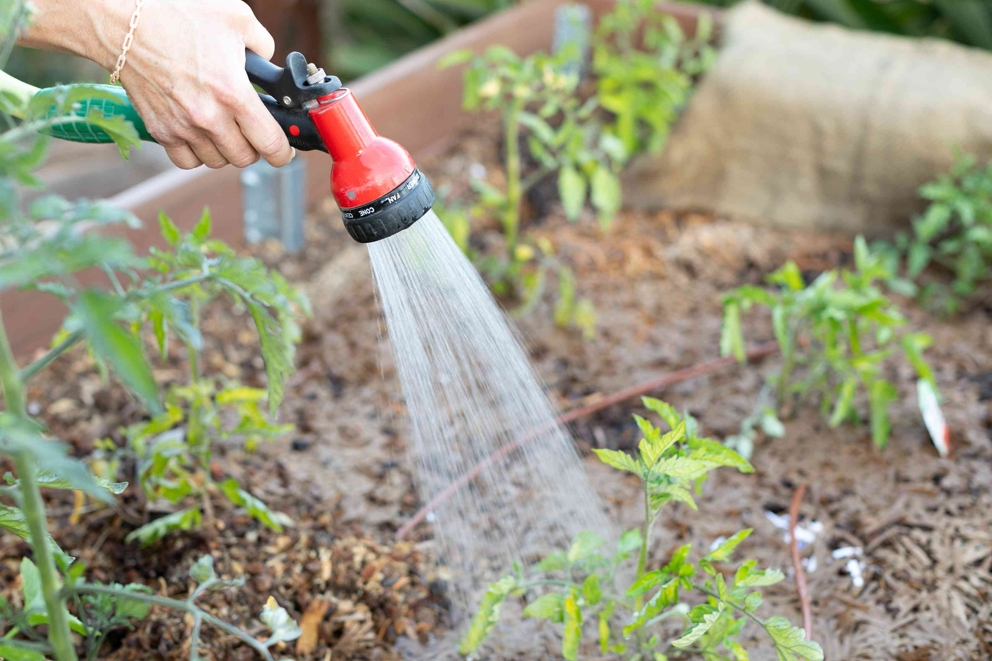Vegetable garden being watered with red garden hose in the morning