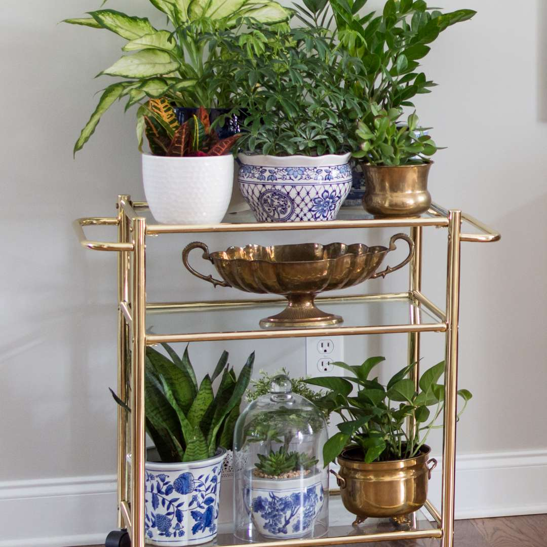 Linda plant shelf