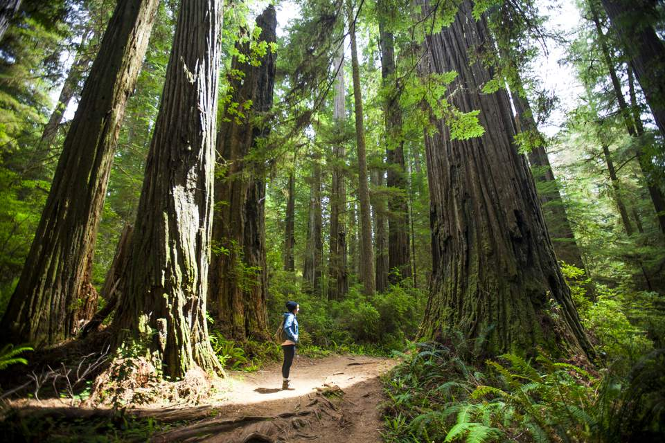 Great Trees of the World: The Oldest, Tallest and More
