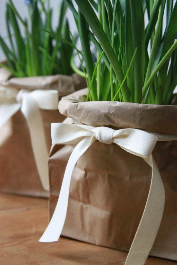 A potted plant in a brown bag with ribbon