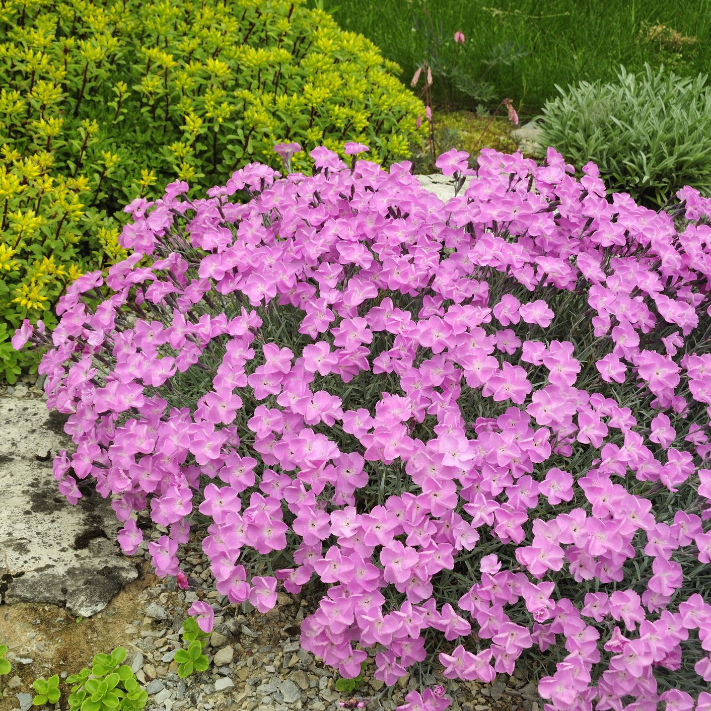 33 Best Plants For A Rock Garden