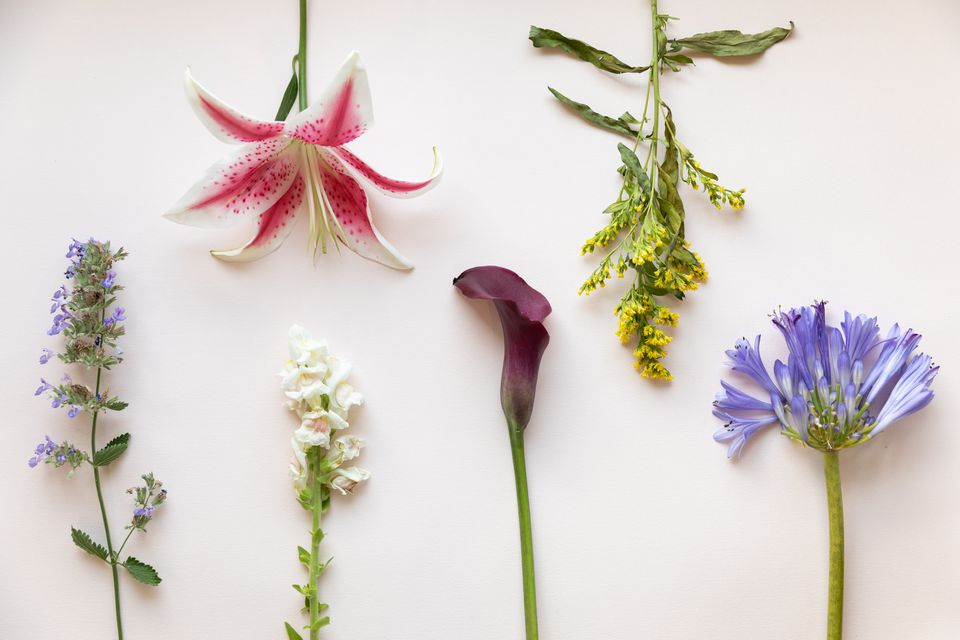 variety of flower stems