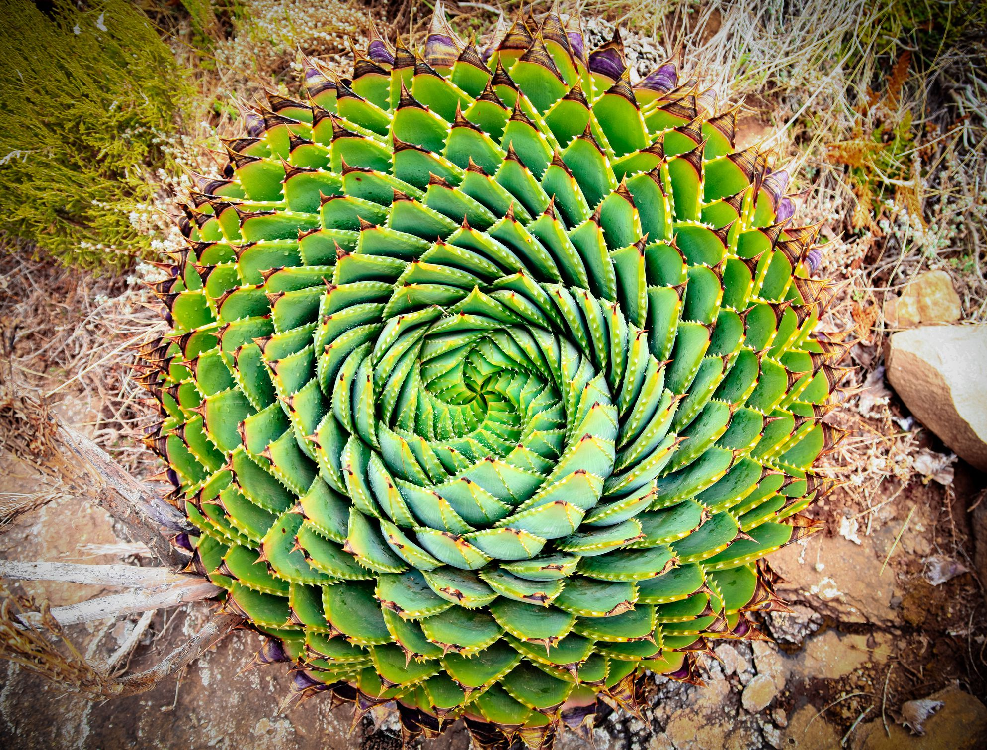 14 Unusual Aloe Types For Your Frost Free Garden