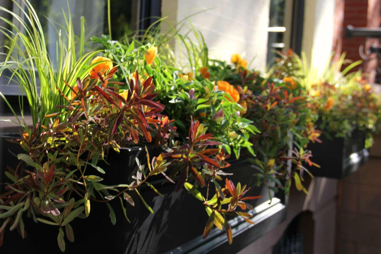 cuadro de ventana de otoño