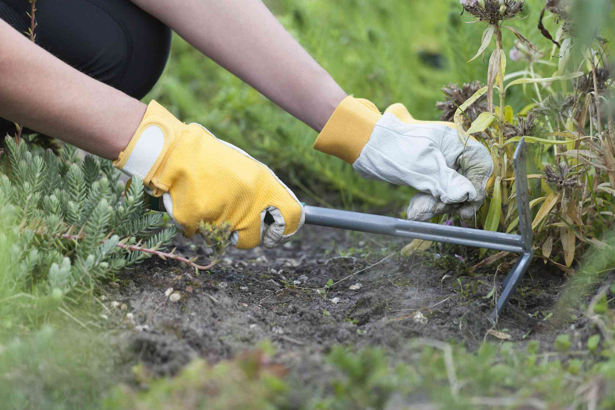 There are many different choices for weeding tools