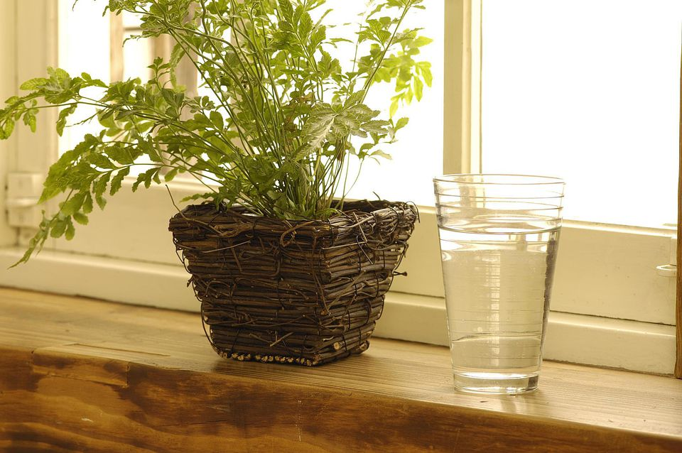 potted plant with water glass