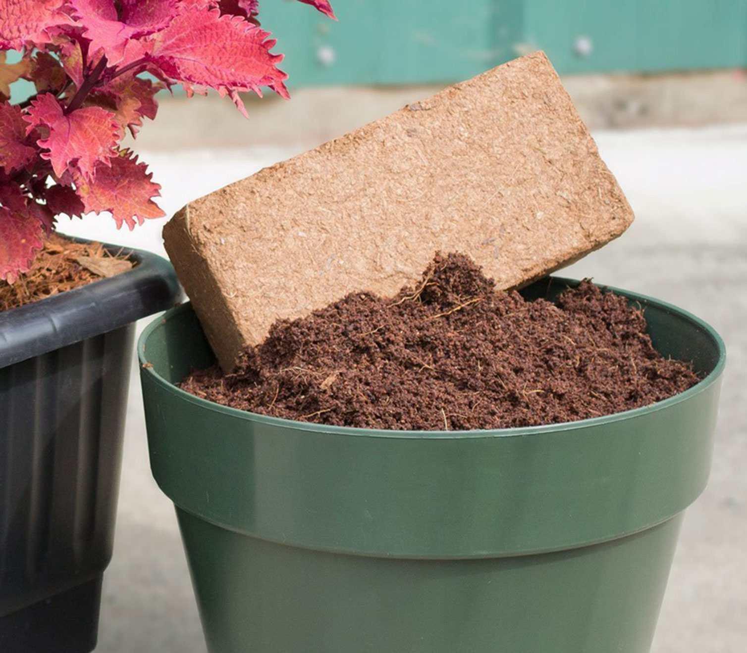 Coir brick in a pot of soil