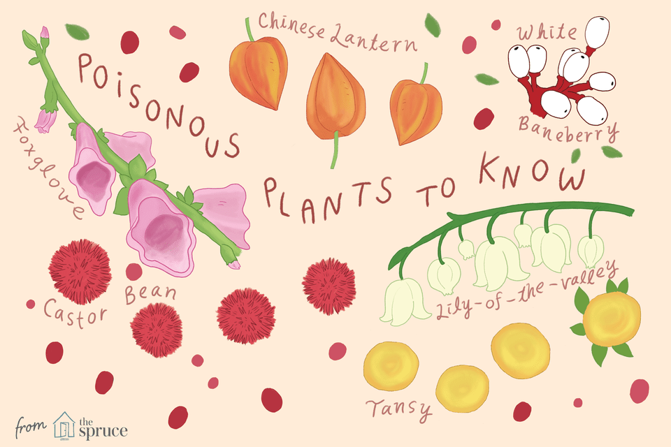 Illustration of types of poisonous plants to know