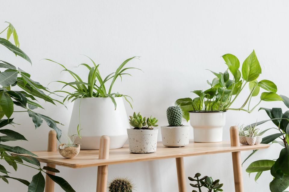 a plant collection on wood shelving with a white background
