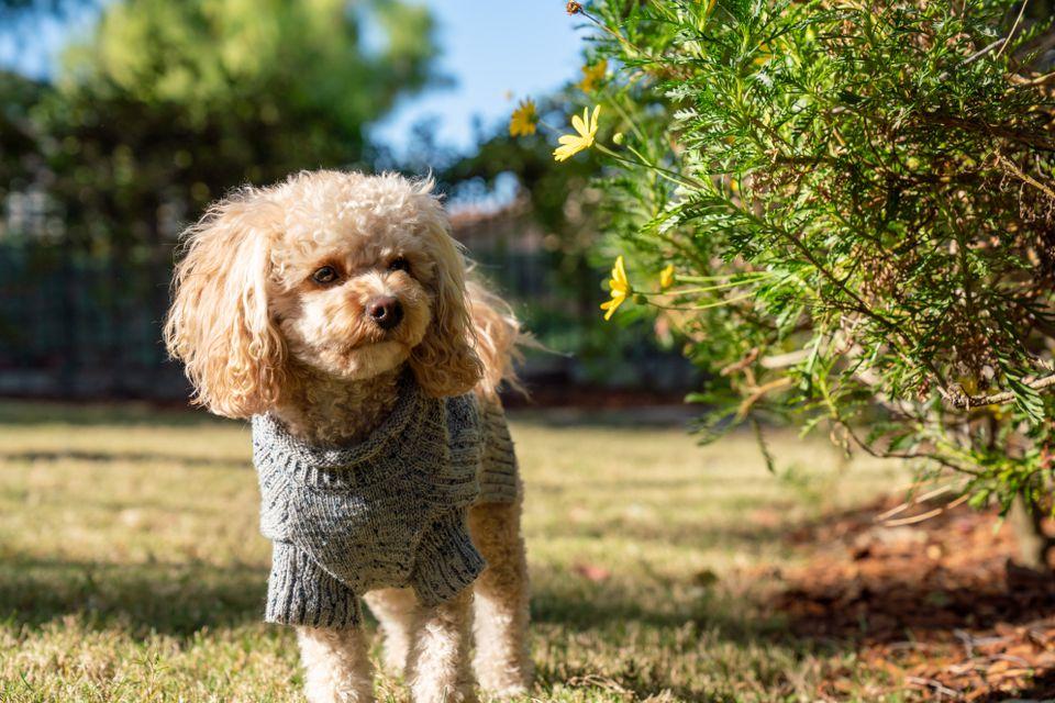 dog in a yard