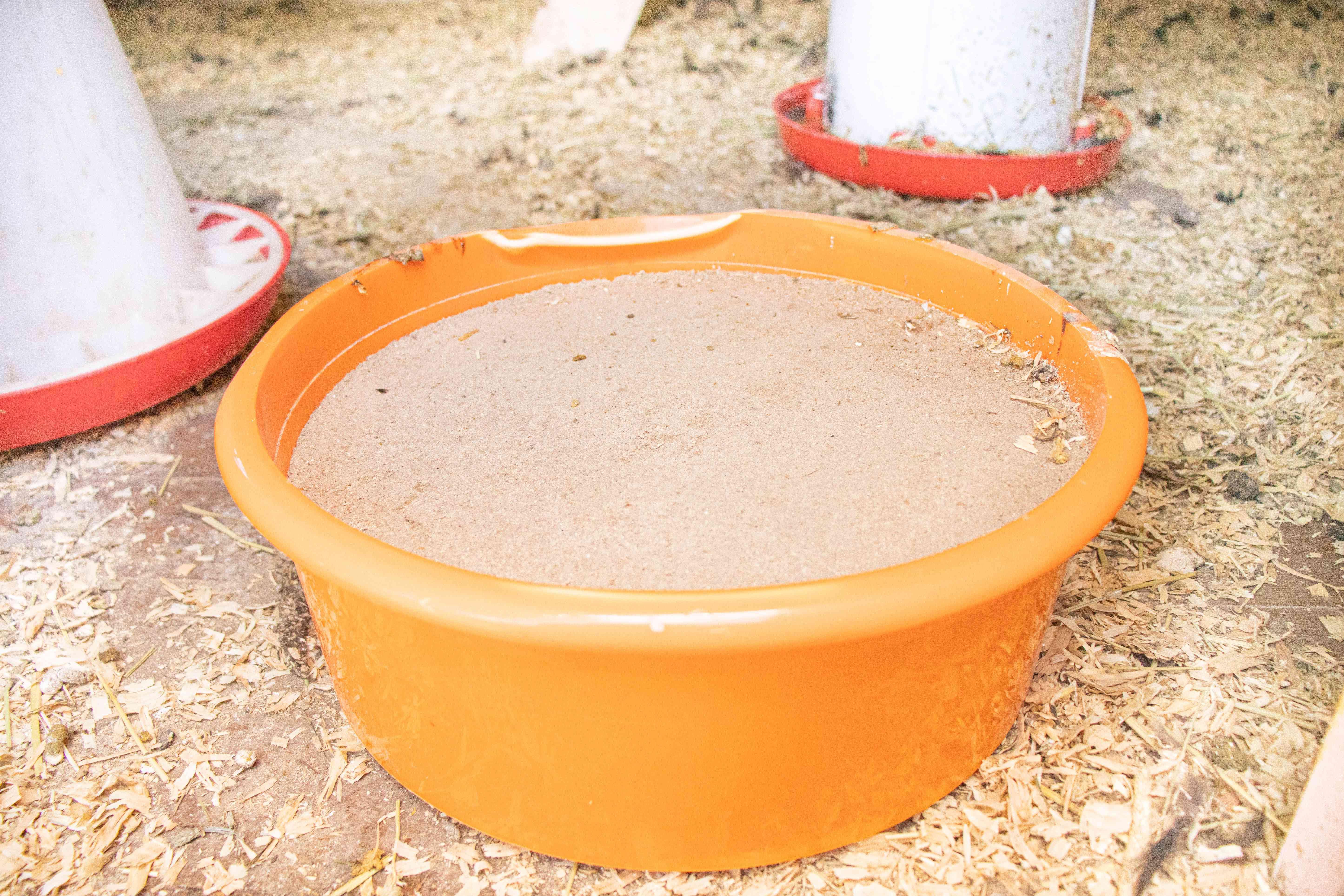 Grit feed in orange plastic container