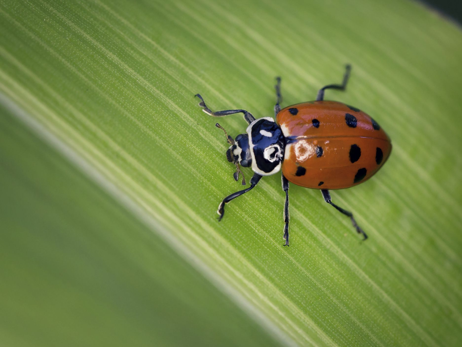 How to Attract Ladybugs