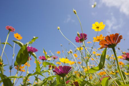 what is a wildflower garden - Wildflower Garden