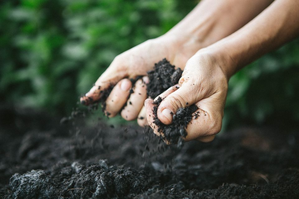 Hands holding dark soil near the ground.