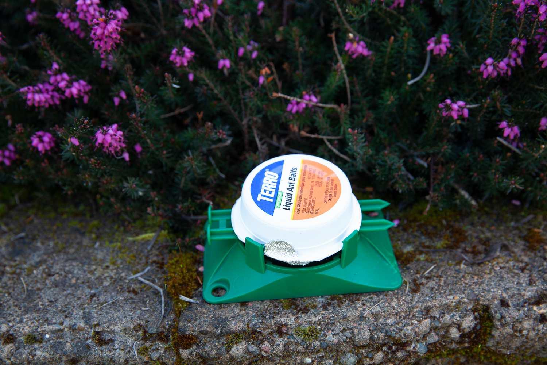 Terro Outdoor Liquid Ant Baits Review