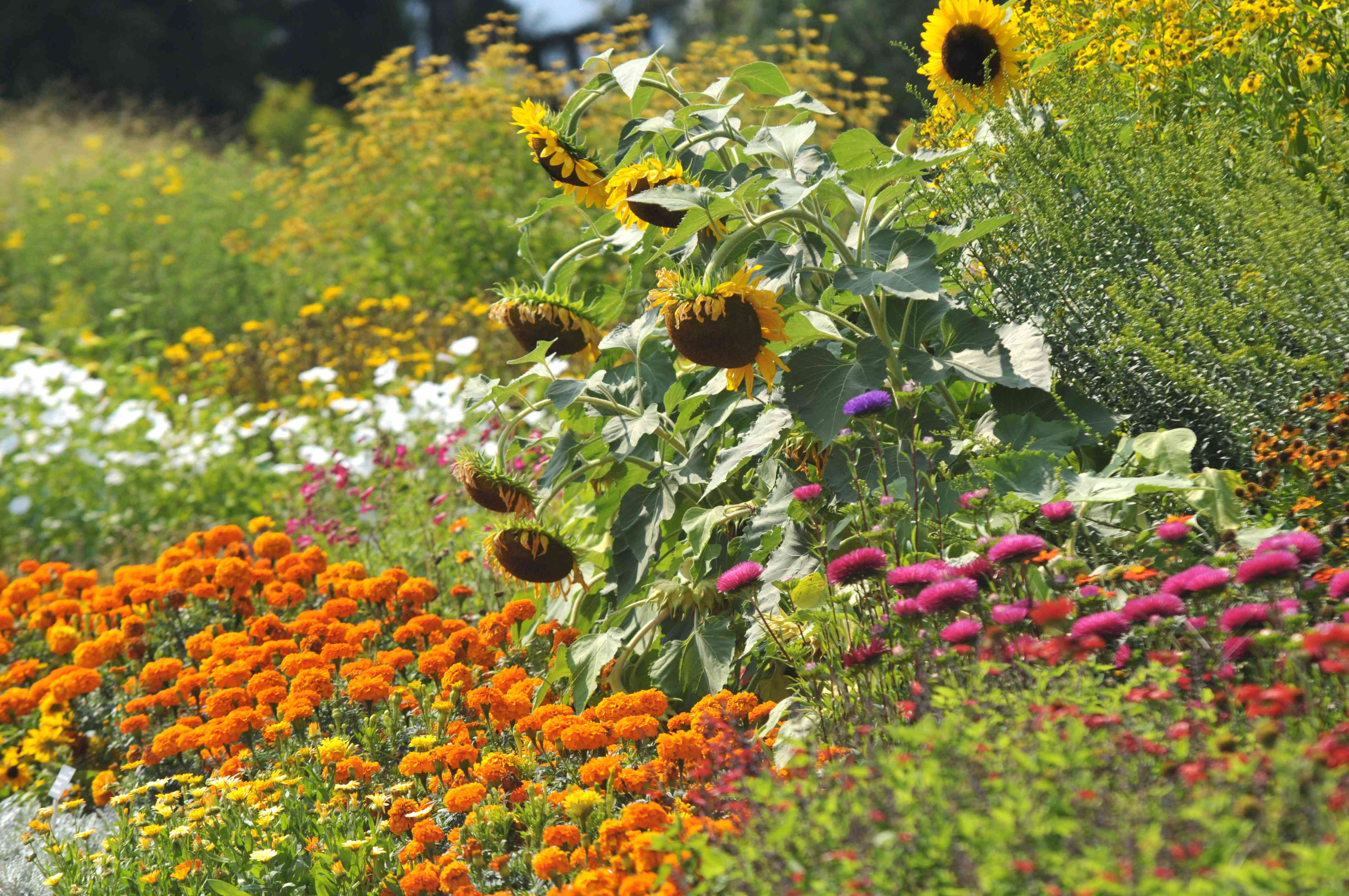 Flowerbed with annual plants and flowers